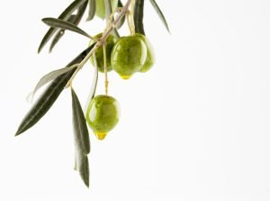 Olive Squalane Oil